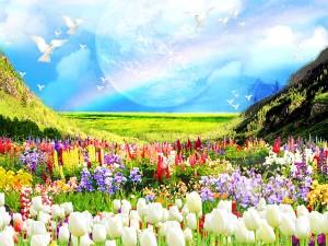 草原 虹 キラキラ 山 花畑